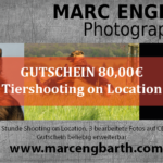 Gutschein Tiershooting on Location